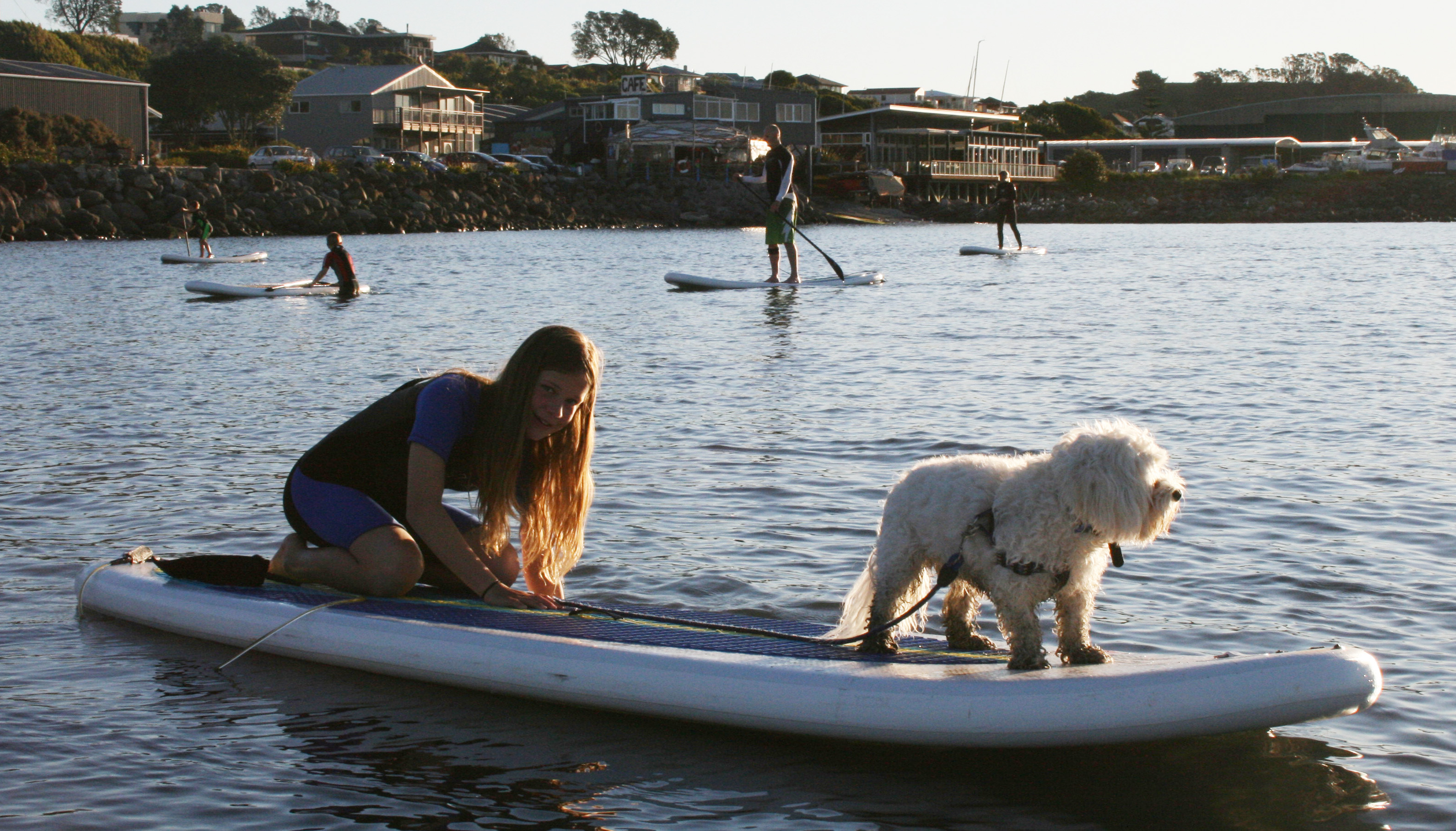 ANIMAL FUN: Ruby Hosking, 11, takes her furry friend Monty for a paddleboard ride during a public give it a go session in New Plymouth's Breakwater Bay. Photo: Supplied